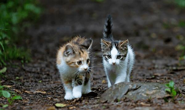 Zwei Kätzchen, die zusammen spazieren gehen, repräsentieren das kittenfishing